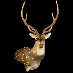San Antonio Taxidermy | Cypress Slough Taxidermy