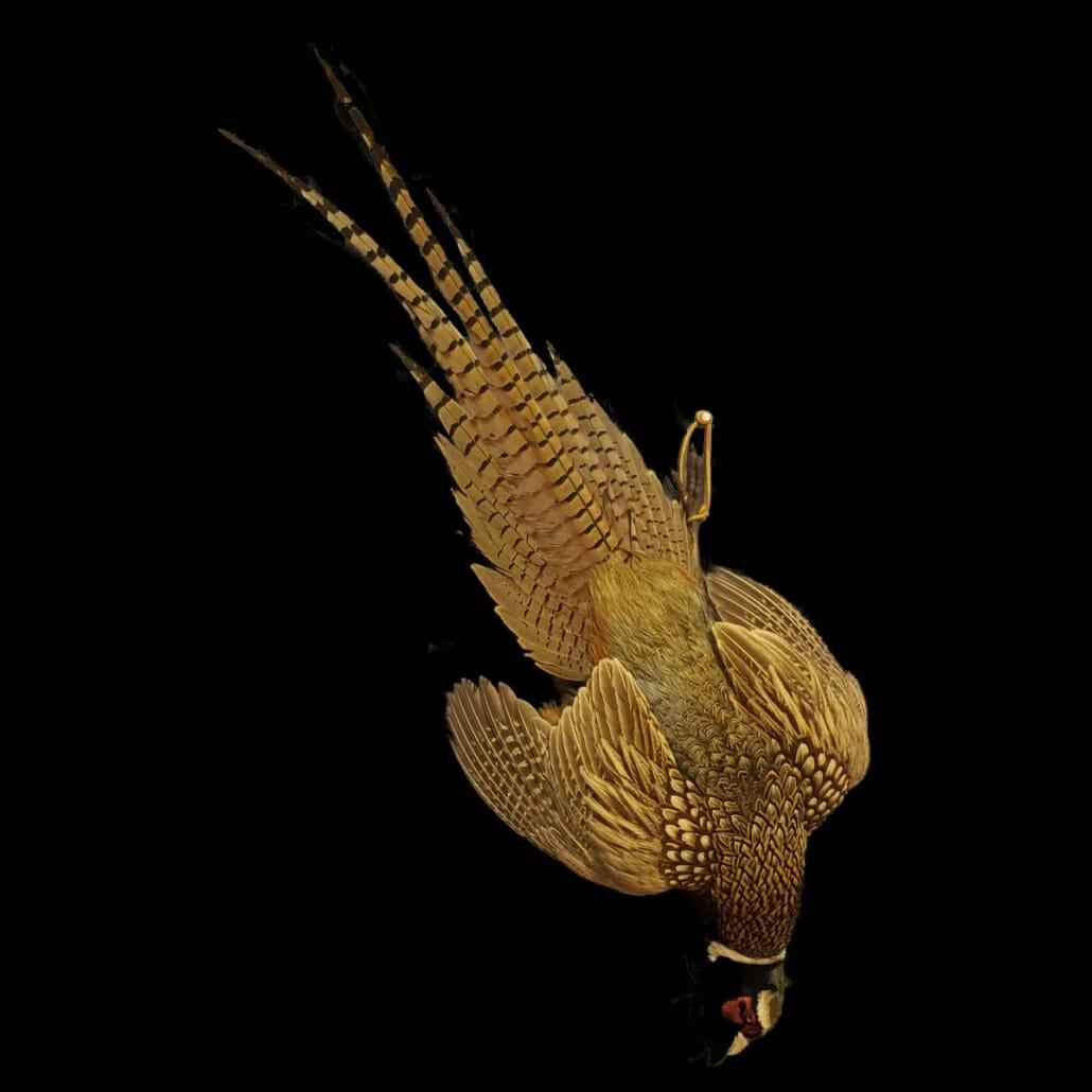 Pheasant Mounts | Texas Taxidermy