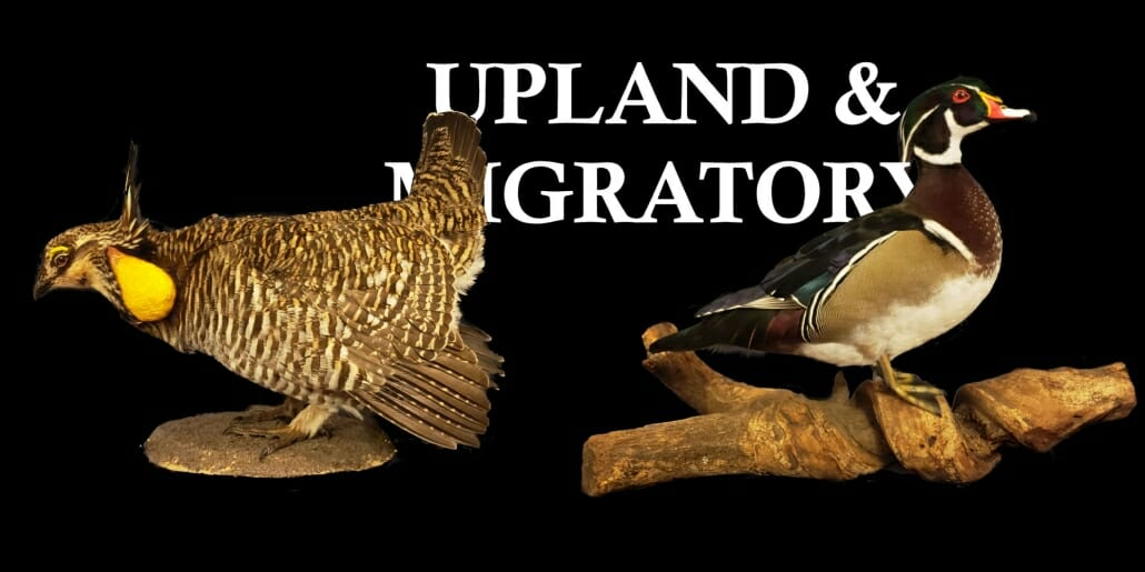 Texas Taxidermy Prices | Migratory Bird Taxidermy Prices