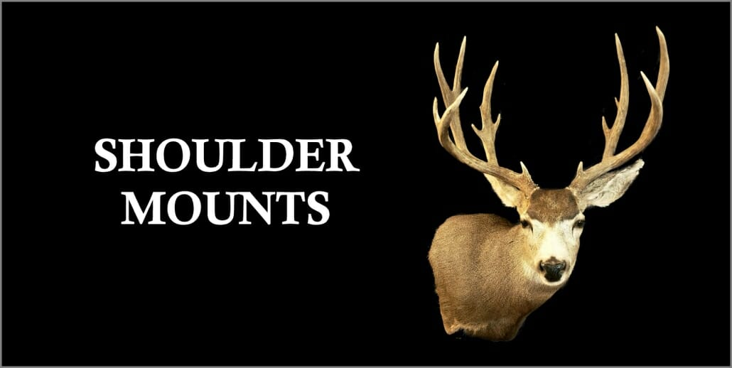 San Antonio Taxidermy | South Texas Taxidermist