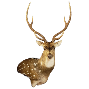 San Antonio Taxidermy | Cypress Slough Taxidermy