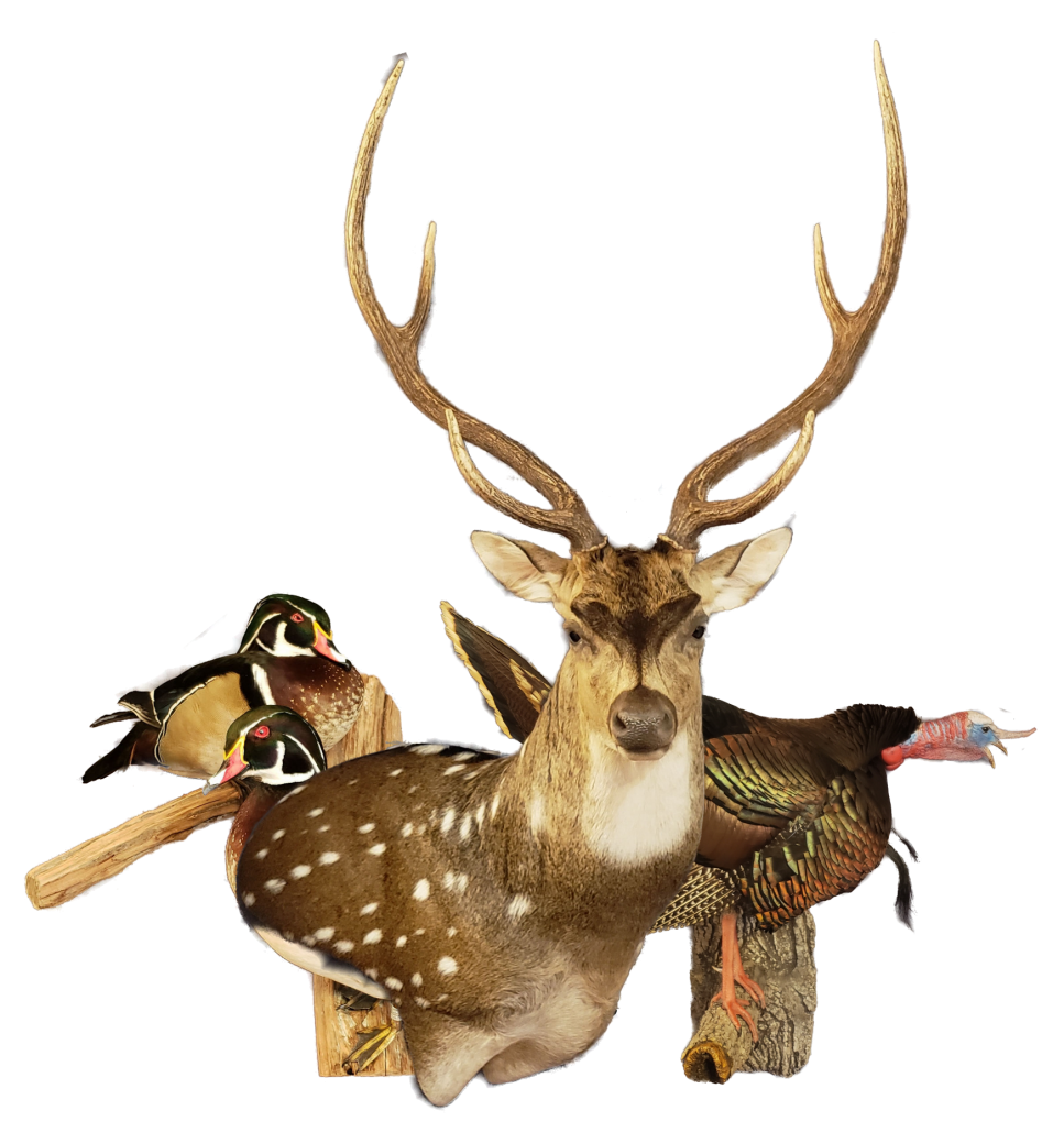 San Antonio Taxidermy Studio | Texas Taxidermist
