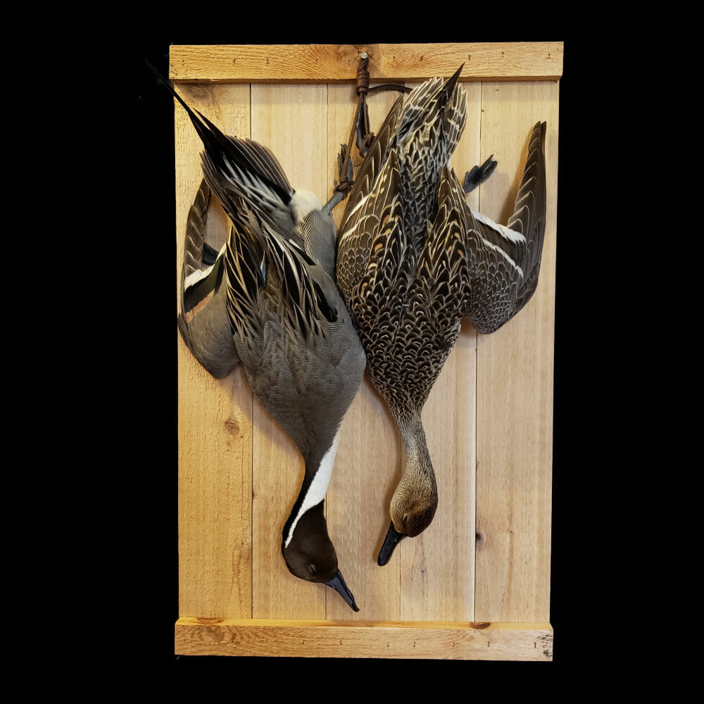 Dead Duck Mounts | Texas Waterfowl Taxidermy