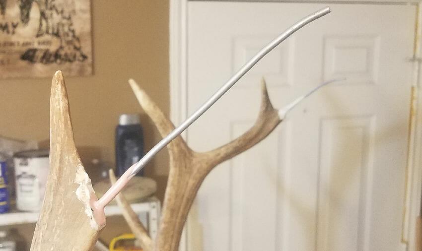 Elk Antler Repair | Guide To Antler Repair Taxidermy