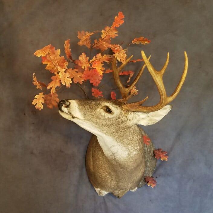 Texas Habitat Taxidermy | Whitetail Deer Shoulder Mount | Texas Taxidermist