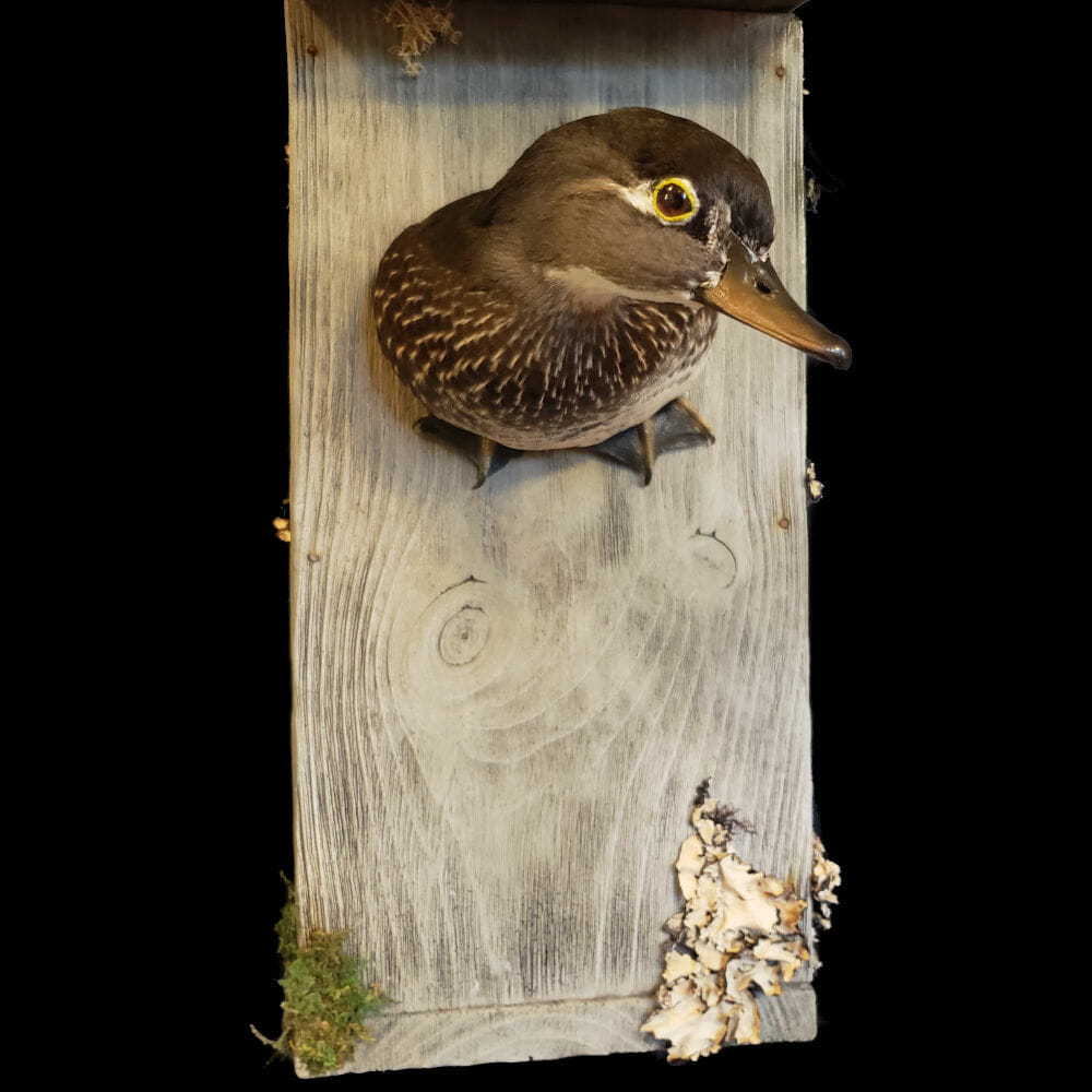 Taxidermy Habitat Solutions | Texas Taxidermy Services