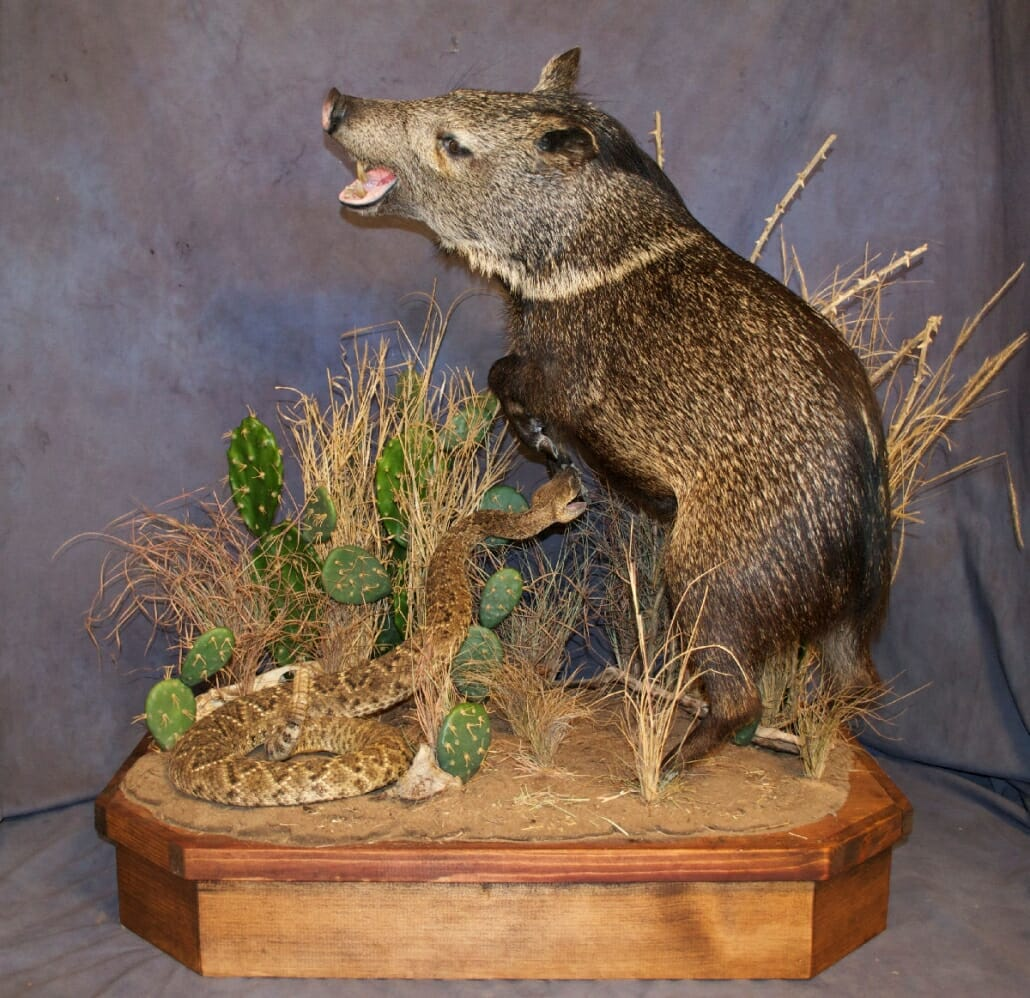 Life Size Taxidermy | Wild Hog Mounts, Bear Mounts | Texas ...