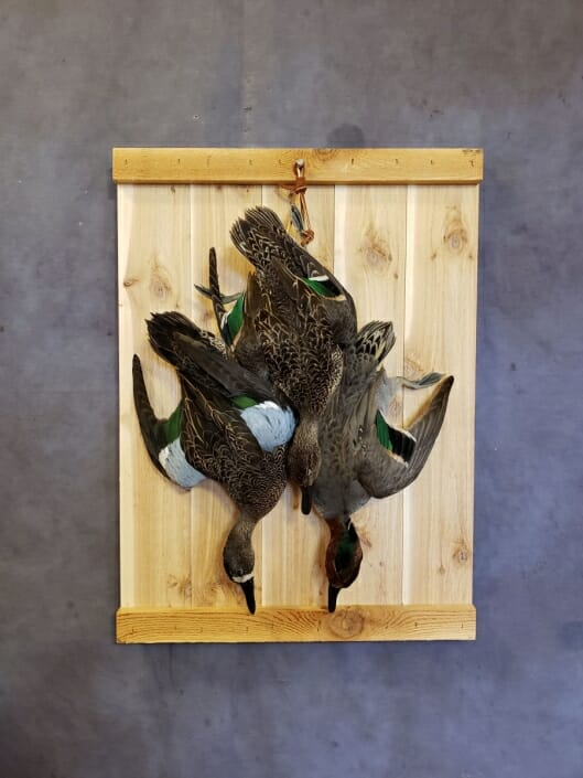 Green Winged Teal Mount | Puddle Duck Mounts | Texas Waterfowl Taxidermy
