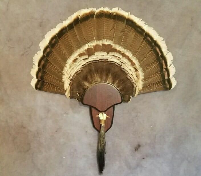 Turkey Fan Mount | Turkey Taxidermy | South Texas Taxidermy Studio