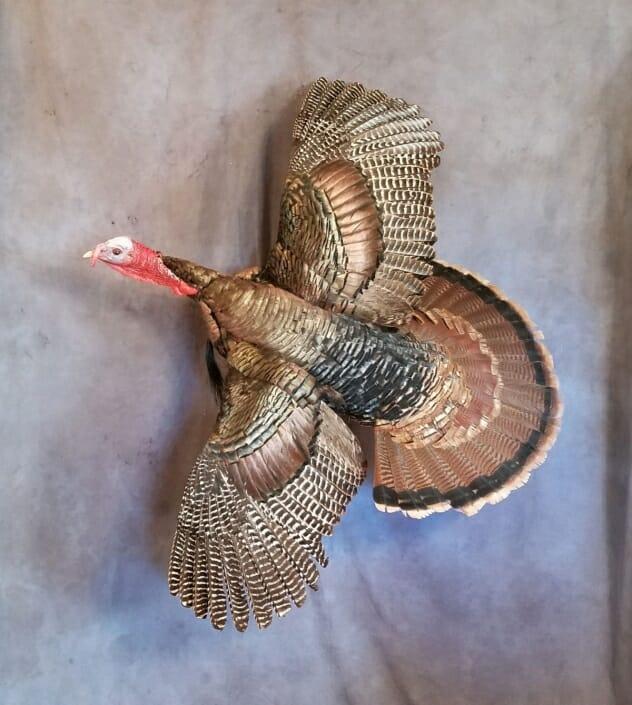 Flying Turkey Mount