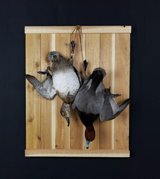 Dead Duck Mount | Redhead Duck Mount