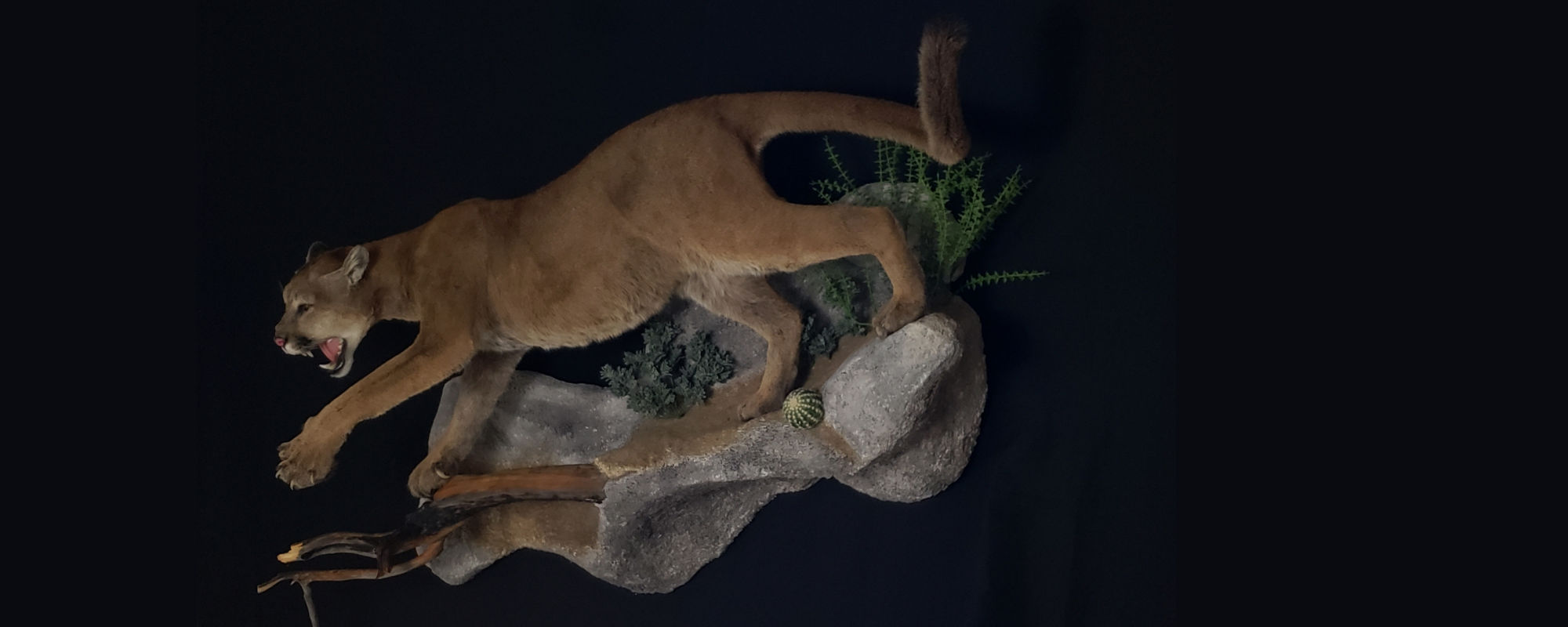 Premier San Antonio Taxidermy Studio
